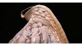 """Orfeo ed Euridice"" Shell Cameo Lamp"